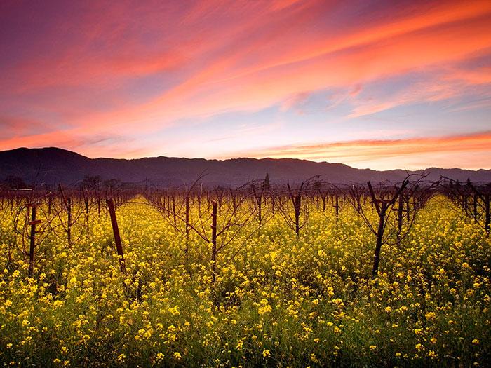 California-The-Flower-Fields