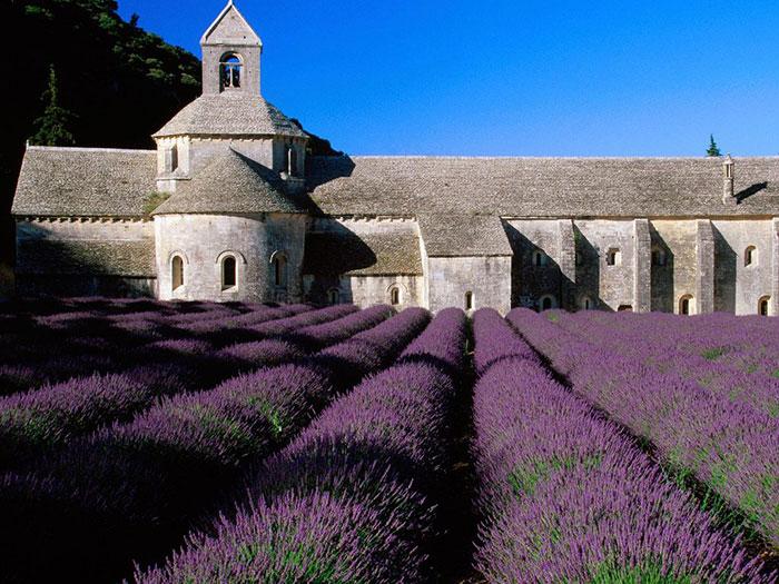 France-Lavender-Flower-Fields