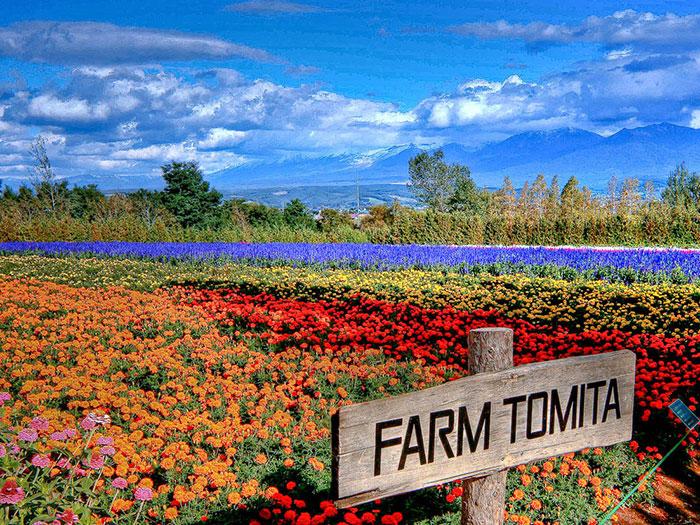 Japan-Farm-Tomita