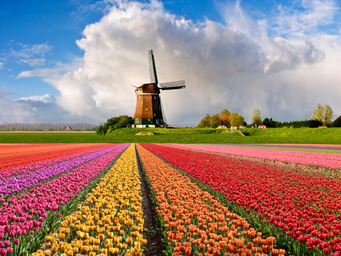 The-Netherlands-Keukenhof-Flower-Garden