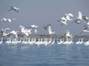دریای خزر و جزیره آشوراده