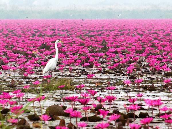 سفری به دریاچه تایلند