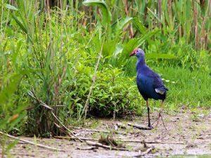 سفر به زیستگاه پرندگان