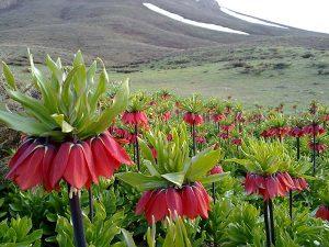 زیباترین دشتهای گل کشور