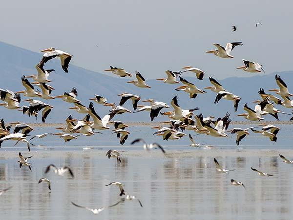 زیباترین و مهمترین دریاچه های ایران