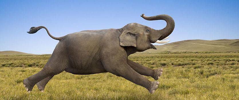 فیل سواری در سفر