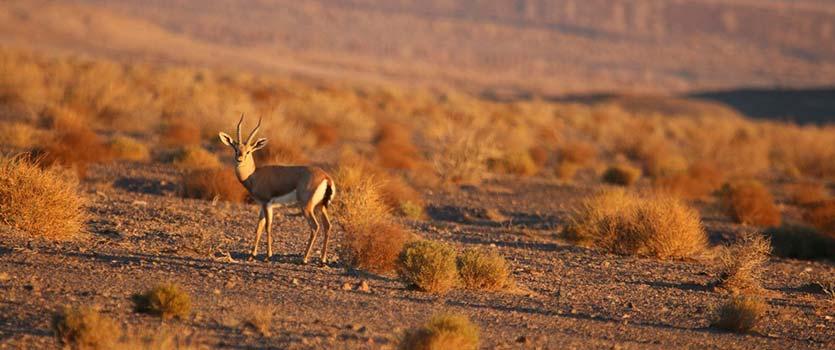 آشنایی با پارکهای ملی ایران