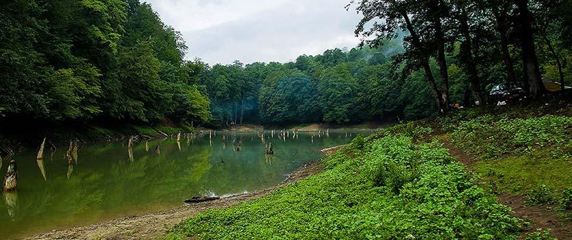 نقش جنگل در  سلامتی