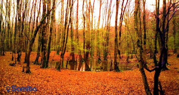 غابات دوهزار تنكابن