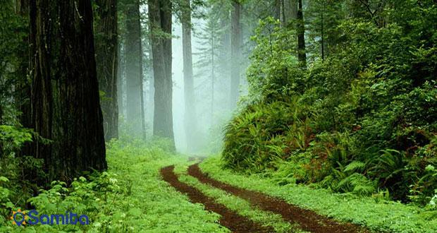 غابات جيلان