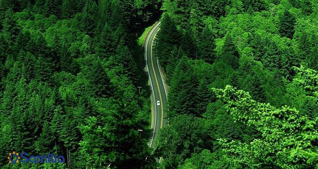 غابات ماسال