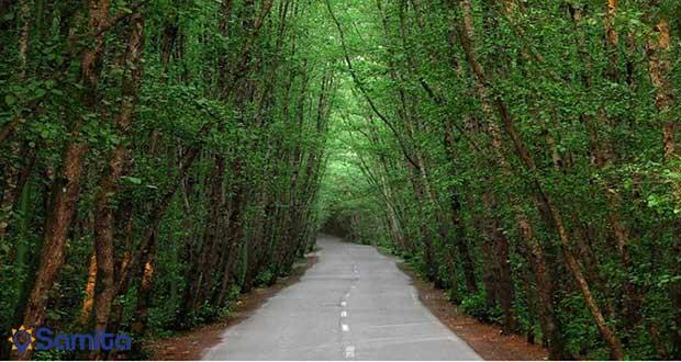 غابات متوفرة على شواطئ بحر قزوين