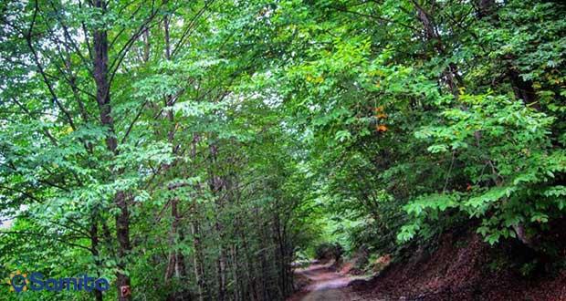 غابات مازيجال