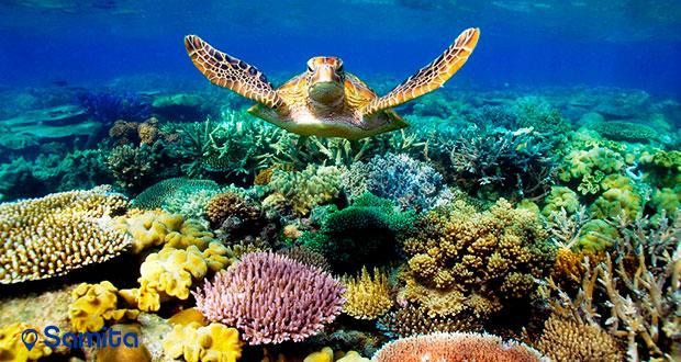 از سد مرجانی بزرگ دیدن کنید