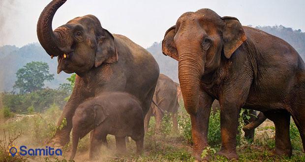 چرا نباید در سفر فیل سواری کنیم