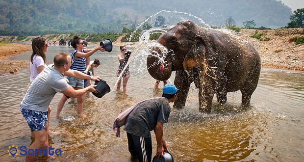 آب بازی با فیل های غول پیکر