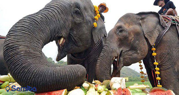 میوه خوردن فیل های غول پیکر