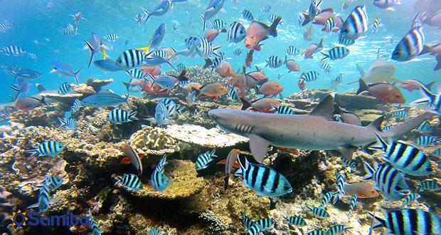 غواصی در آب های منطقه ی فیجی