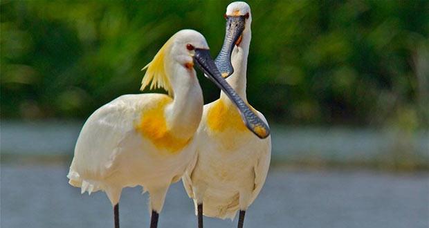 میانکاله بهشت پرندگان