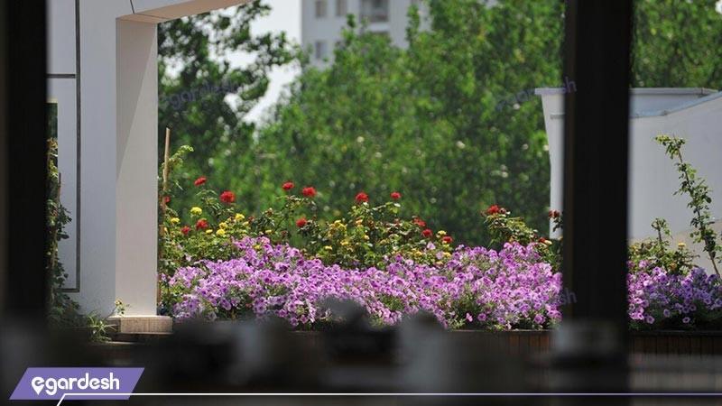 چشم انداز هتل ونوس پلاس