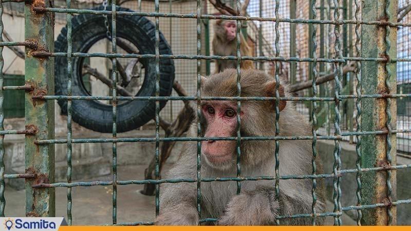 باغ وحش هتل باری